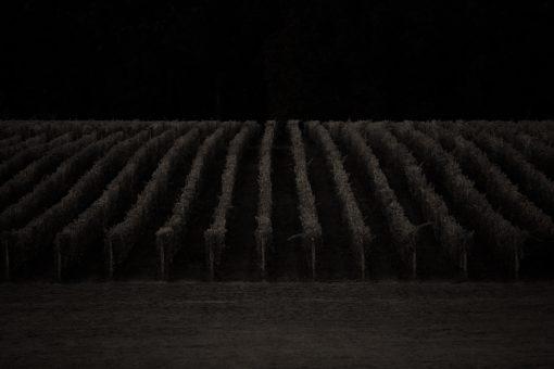Vineyard Nightfall