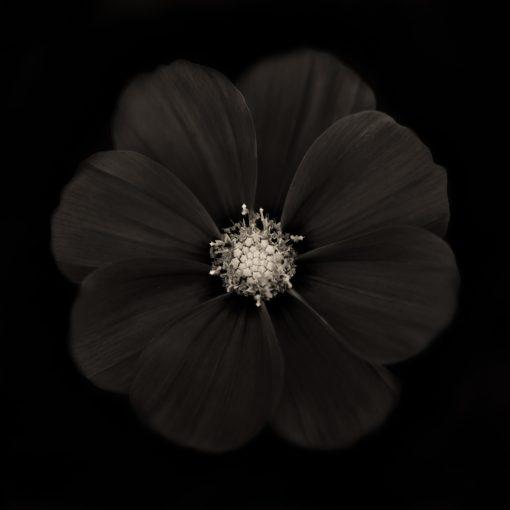 Warhol Flower 1