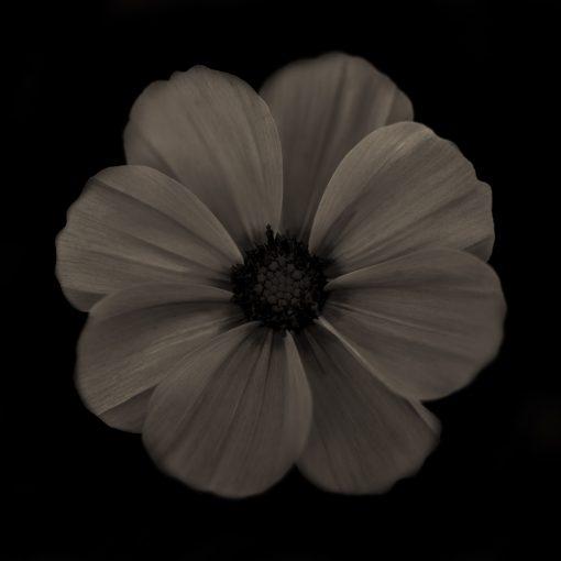 Warhol Flower 3