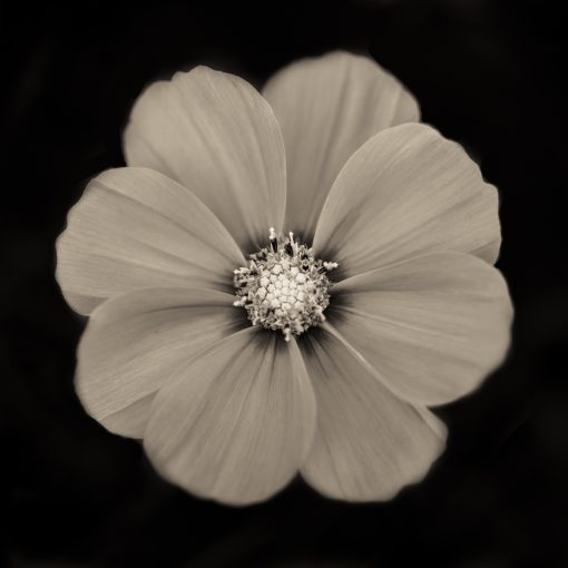 Warhol Flower 4