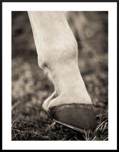 white horse horseshoes