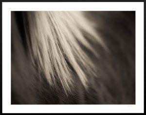 blonde mane and dark horse photography