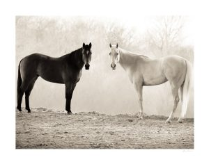 black and white horse symmetrically looking at the camera with haze on the back
