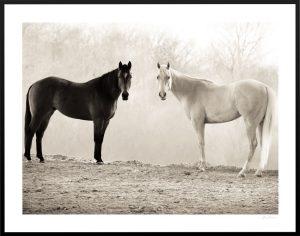 symmetric black and white horses