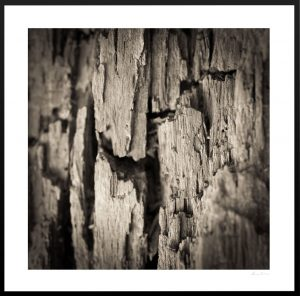 close up of tree bark texture
