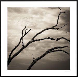 tree branches and cloudy sky | custom frame
