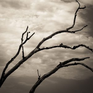 tree branches and cloudy sky | dark