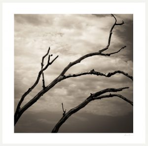 tree branches and cloudy sky