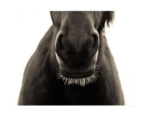 horse nose and whiskers with light coming from back
