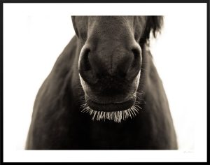 horse nose and whiskers