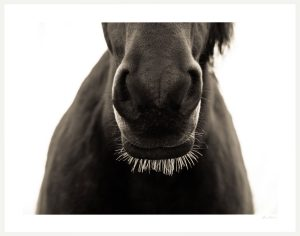 close up photograph of horse whiskers