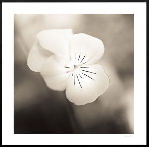 macro photograph of beautiful flower