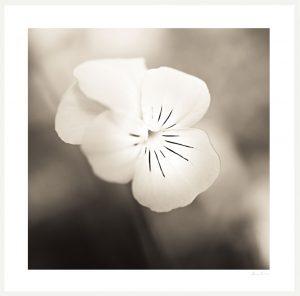 detail macro image of flower
