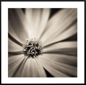 close up shot of open flower