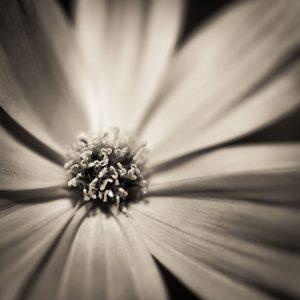 close up shot of flower