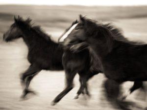 blurred horses running