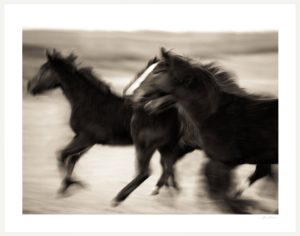 blurred horses running fast on pasture