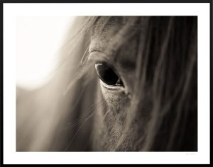 horse eye close up print