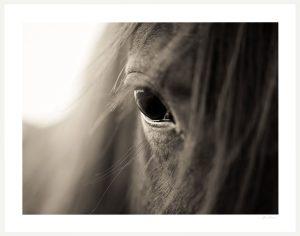 horse eye close up