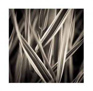 abstract art print of macro nature photograph