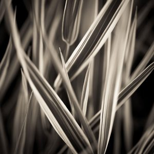 abstract nature print of grass