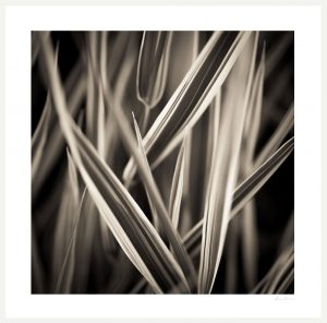 abstract nature photograph