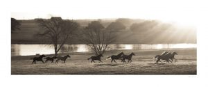 horses running on pasture as the sun rises. | lake on the background and trees
