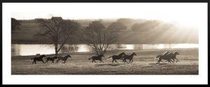horses running on pasture amidst sunrise