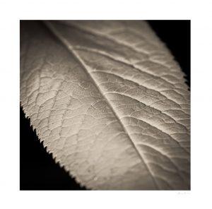 macro leaf texture