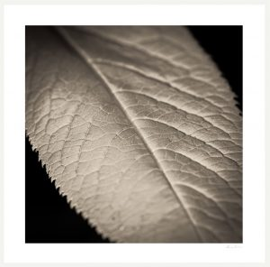 close up texture of a leaf