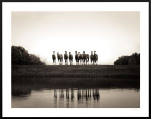 horses staring at the camera as their images reflect on pond