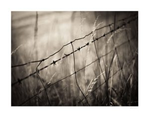 barbed wire fence seem in detail with blurry background