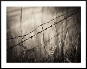 barbed wire fence in close up shot