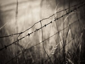 barbed wire fence in a macro shot