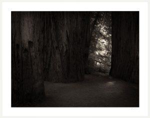dark woods and tree barks