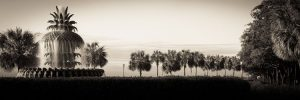 Charleston, SC Pineapple fountain on waterfront park   palmetto trees